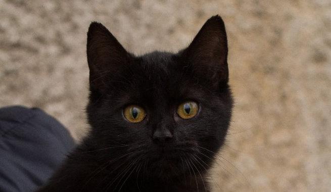 Opuštěná kočička ze Zdic