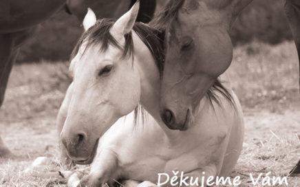 Domov pro vysloužilé koně